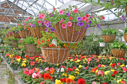 Itu0027s May! One Of Our Favorite Months At Sam Mazzau0027s! Our Greenhouses Are.  Bursting With Colorful Flowering Baskets! All Your Gardening Supplies Are  Here!